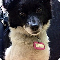 Adopt A Pet :: FRIDA - Tacoma, WA