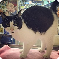 Adopt A Pet :: Bubbles - Raleigh, NC
