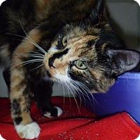 Adopt A Pet :: Sassy Lou - Hamburg, NY