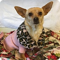 Adopt A Pet :: Jenny - Temecula, CA