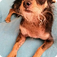 Adopt A Pet :: BOGHI - Inland Empire, CA