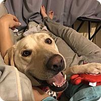 Adopt A Pet :: Parker (Needs Foster) - Washington, DC