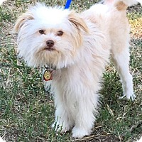 Adopt A Pet :: Toby - Yukon, OK