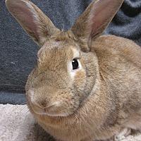 Adopt A Pet :: Ferris - Newport, DE