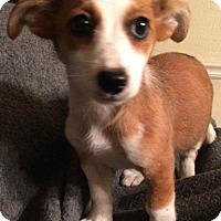 Adopt A Pet :: Charla - Hartford, CT
