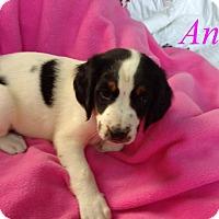 Adopt A Pet :: Alex - Plainfield, IL