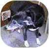 Labrador Retriever Mix Dog for adoption in Palatine, Illinois - DOROTHY (BETHANY)