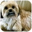 Photo 3 - Lhasa Apso/Terrier (Unknown Type, Small) Mix Dog for adoption in Los Angeles, California - BUNGEE