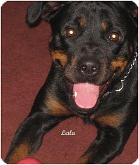 Rottweiler Dog for adoption in Darlington, Maryland - Leila