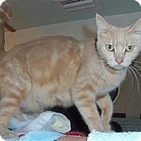 Adopt A Pet :: Nattie - Sun City Center, FL