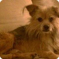 Adopt A Pet :: Oak - North Wales, PA