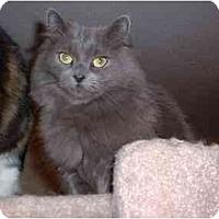 Adopt A Pet :: Molly - Lethbridge, AB