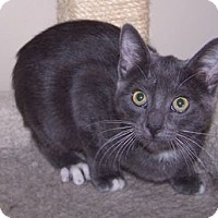 Adopt A Pet :: K-Rescue4-Callista - Colorado Springs, CO