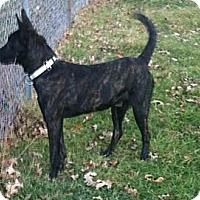 Adopt A Pet :: Remy in OK - Jamestown, CA