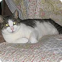 Adopt A Pet :: Heather - Farmingdale, NY