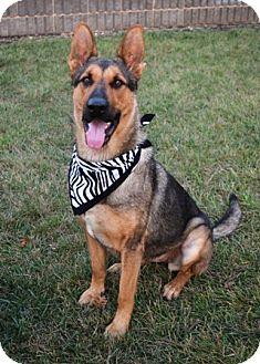 German Shepherd Dog Mix Dog for adoption in Dublin, California - Sophie