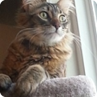 Adopt A Pet :: Lowki - Vancouver, BC