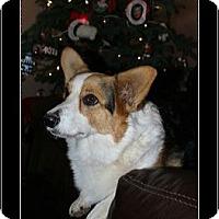 Adopt A Pet :: Rae - Lomita, CA