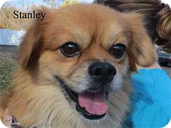 Pomeranian Mix Dog for adoption in Warren, Pennsylvania - Stanley