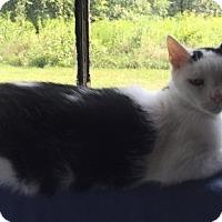 Adopt A Pet :: Bogey - Washington, VA