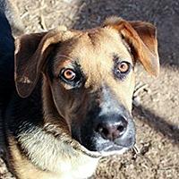 Adopt A Pet :: Cooper - Phoenix, AZ