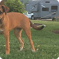 Adopt A Pet :: Daisy - New Oxford, PA