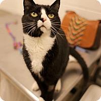 Adopt A Pet :: Xander Bogaerts - Salem, MA