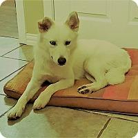 Adopt A Pet :: Bri - Plano, TX