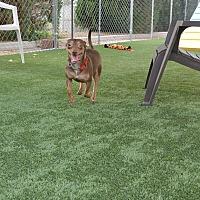 Adopt A Pet :: Taz - Meridian, ID
