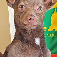 Adopt A Pet :: Roo - Grants Pass, OR