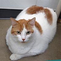 Adopt A Pet :: Scamp - Indiana, PA