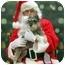 Photo 3 - Schnauzer (Miniature) Mix Dog for adoption in Overland Park, Kansas - Cissy