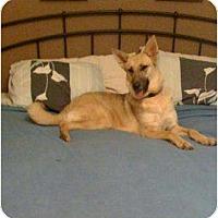 Adopt A Pet :: Leeloo - Pike Road, AL