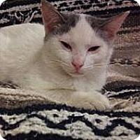 Adopt A Pet :: Mitch - Modesto, CA