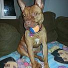 Adopt A Pet :: Mona