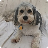 Adopt A Pet :: Rumson NJ - Casey - New Jersey, NJ