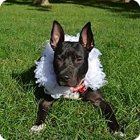 Adopt A Pet :: Judy - New York, NY