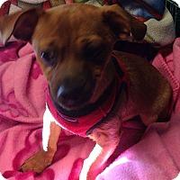 Adopt A Pet :: Rudolph - Kansas city, MO
