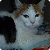 Adopt A Pet :: Jasmine - Hamburg, NY