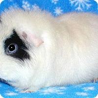 Adopt A Pet :: Birrita - Steger, IL