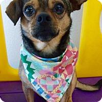 Adopt A Pet :: KAHLUA (video) - Los Angeles, CA