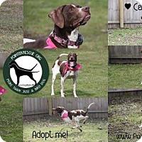 Adopt A Pet :: Casey *Cross Post - Oak Ridge, NJ