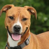 Adopt A Pet :: Isabel - Roundup, MT