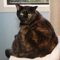 Adopt A Pet :: Prissy - Greensboro, GA