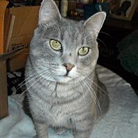 Adopt A Pet :: Elvis - Roseville, MN