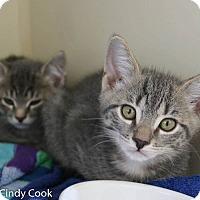 Adopt A Pet :: Smokey - Ann Arbor, MI