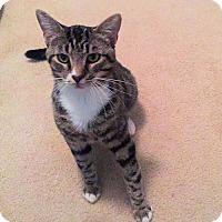 Adopt A Pet :: Mr. Whiskers - Petersburg, VA
