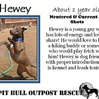 Adopt A Pet :: Hewey - Lafayette, OR
