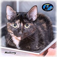 Adopt A Pet :: Mallory - Howell, MI