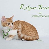Adopt A Pet :: Kilgore Trout - Riverside, CA